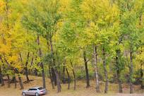 大森林中停泊的小汽车