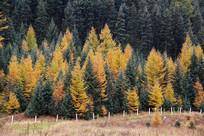 多彩森林原始森林
