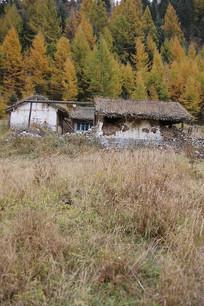 废弃的森林小屋