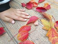 红叶与小手