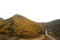 金色五彩森林秋景