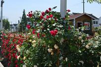 开满花的围栏