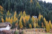 林场秋色五彩森林