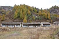 林场宿舍废弃的房屋