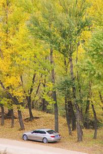 秋林原始森林