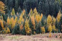 五彩秋林多彩森林