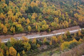 五彩森林盘山公路秋色美景