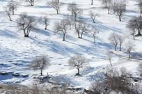 俯瞰雪地树林