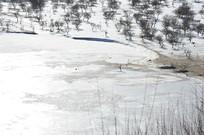 雪地无人区