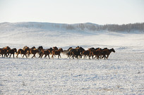 奔跑的马群