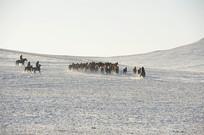 集合的马群