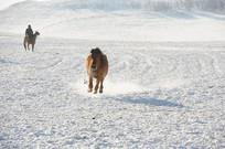 开溜的马儿