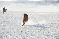 撒欢跑的马匹