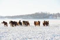 散乱的马群