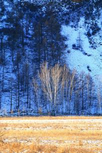 林海雪原风光
