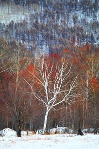 林海雪原红柳景观