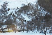 雪地森林马群