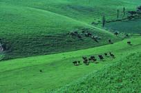 绿色草坪养马场
