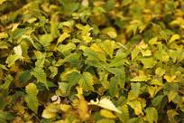 绿色的树叶