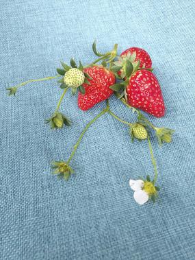 青草莓红草莓