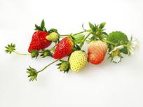 青草莓静物