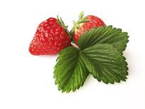 鲜果草莓甜