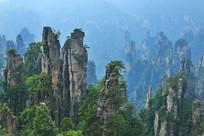 武陵源砂岩峰林地质景观