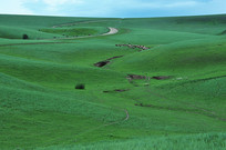 夏季草原上的羊群风光