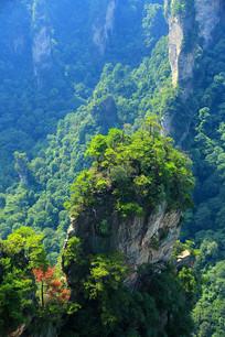 张家界奇峰绿树之树