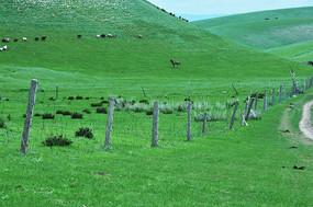 半山坡的羊群