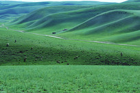 草原山坡肌理