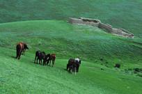 集体出走的马群