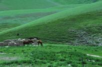 一群马吃草