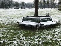 白雪压绿草