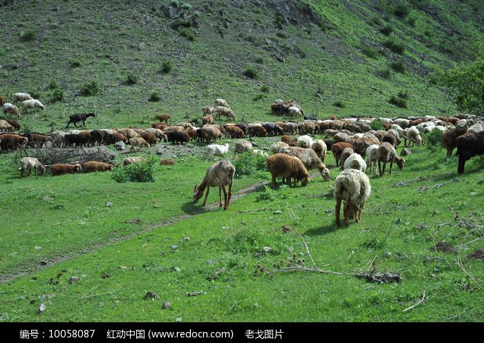 草原牧羊图片