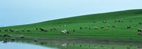 河边的羊群
