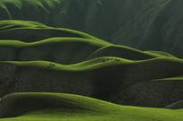 人体草原全景
