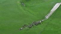 新疆绿色山坡
