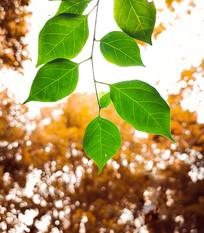 深秋的一片绿叶