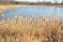 圆明园的冬日湖泊