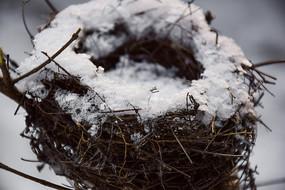 白雪覆盖的鸟窝近景