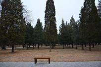 北京天坛园林