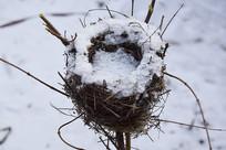 冬季的小鸟窝
