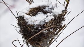 干草编织的鸟窝
