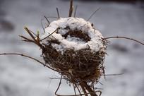 树枝上的鸟巢