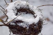 雪中的鸟窝