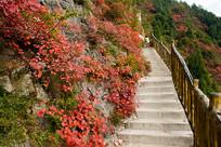 登山梯道旁的巫山红叶
