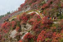 健身步道上观看巫山红叶的游客
