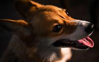清晰的小狗头像