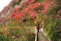 巫山红叶观光步道